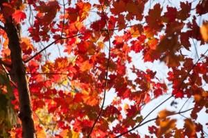 Fall_foliage (1 of 1)